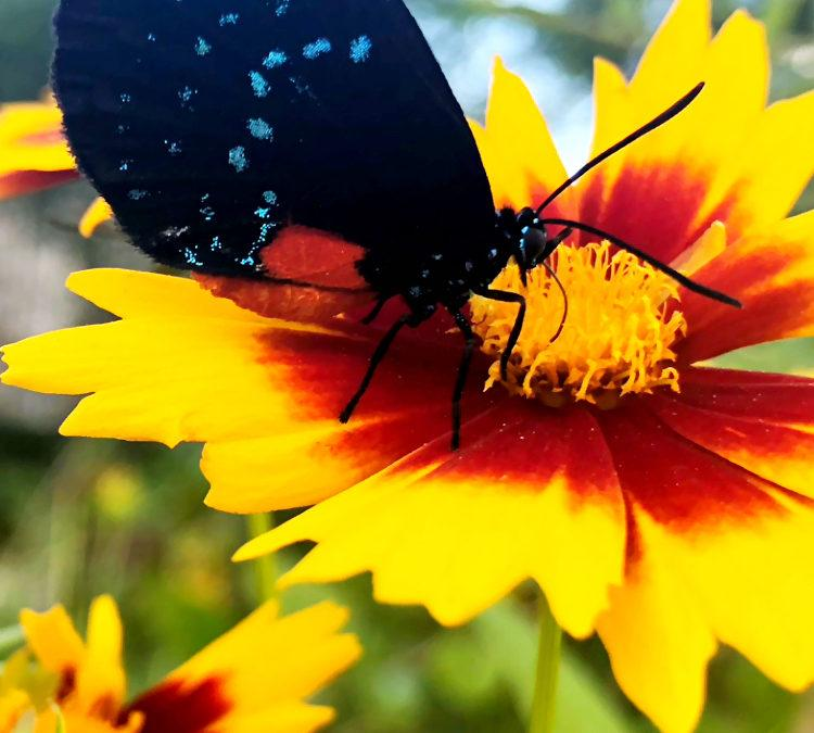 It's National Pollinator Week and Our Pollinators are in Trouble